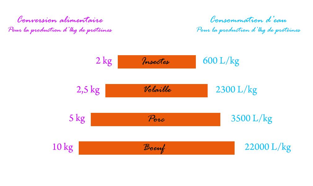 Les besoins alimentaires/eaux